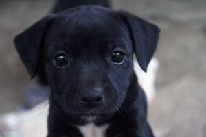 just-a-cute-puppy