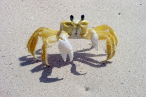 Susie the crab.