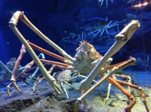 Brutus the crab.